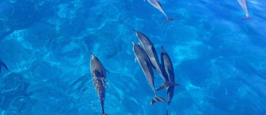 Maui County Bans Captive Cetaceans for Exhibition and Research