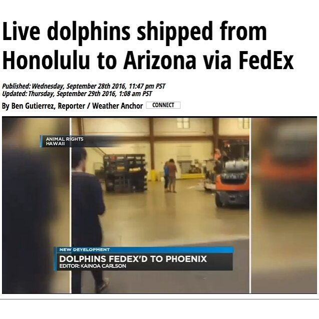 Dolphin Quest moves Hua between Hawaiʻi Facilities and Transfers Kainalu, Liko and Noelani to Controversial New Arizona Facility