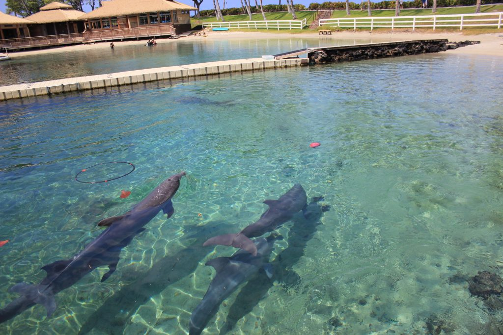 Supported the First Hawaiʻi Bill to End Permitting of Transfer of Captive Cetaceans